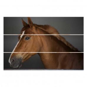 Foto op hout 40 x 30 cm